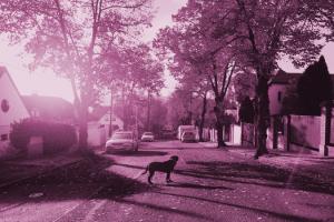 Indemnización por atropello de un perro